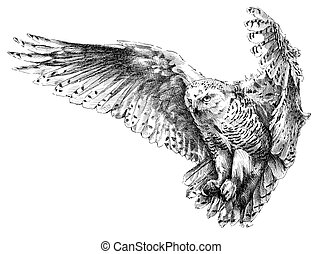 owl - perokresba