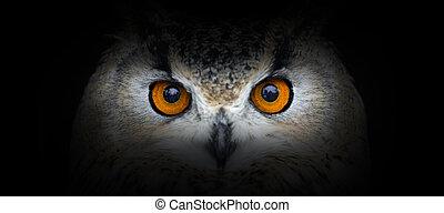 Owl portrait on a black background