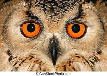 Owl portrait - Close-up portrait of an owl with large orange...