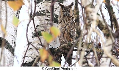 owl sits among the branches of an autumn rain