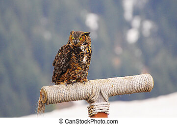 Owl sits on the wooden stick on mountain background.