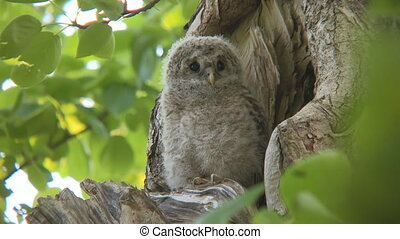 owl sitting in a nest on a tree in the forest