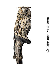 Owl sitting on a branch isolated on white background.