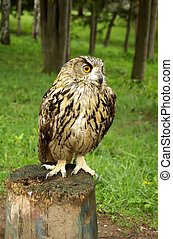 Owl sitting on a tree stump