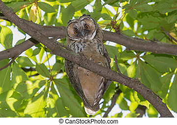 owl sitting on branch of tree