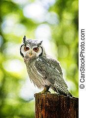 Owl Sitting on Stump