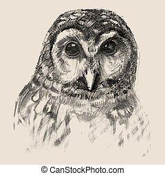 Owl sketch drawn hands