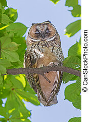 owl sleeping on branch of tree