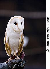 owl look around