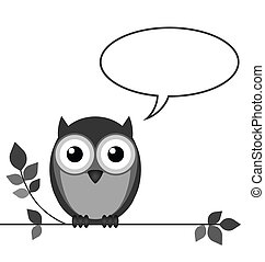Owl talking with copy space for own text isolated on white...