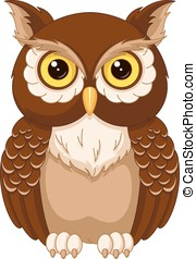Owl - The image of the owl on a white background