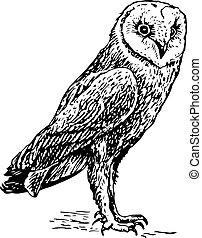 Owl tyto alba standing on the ground