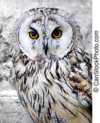 Wild owl with orange eyes closeup