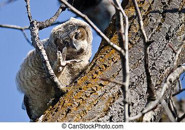 owlet, oog, boompje, jonge, talon, terwijl, perched, krassen...