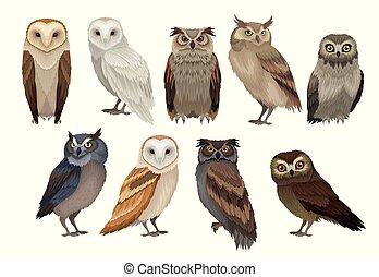 owls., ベクトル, creatures., 鳥類学, 要素, 種, 飛行, birds., セット, 別, 平ら, 森林, 野生, 本
