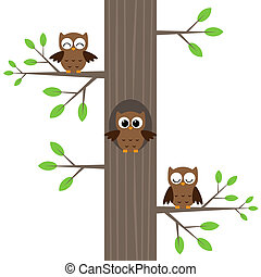 Owls on tree
