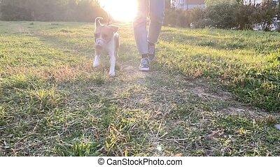 owner., chien, femme, lent, beagle, mignon, extérieur, motion., elle