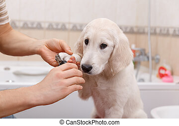 owner grooming his dog at home