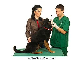 Owner with dog at dentist checkup