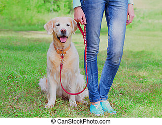 Owner woman walking with her Golden Retriever dog on a leash in a park