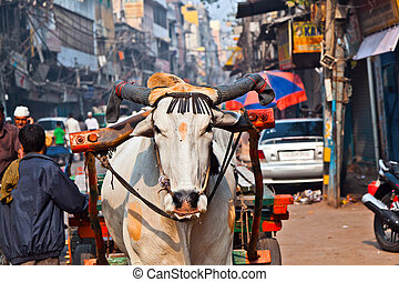 Ox cart transportation on early morning in Delhi, India - Ox...