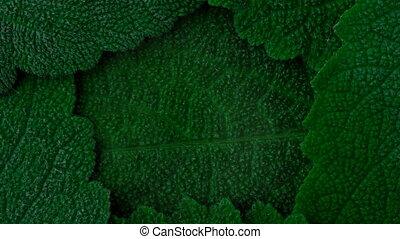 Oxygen. Secrete O2. Dark green leaves background. Close up...