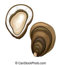 oyster., abierto, mariscos, aislado, ilustración, plano de ...