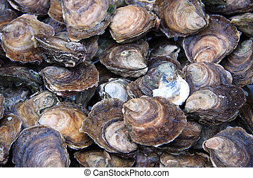 Oyster background - A background fo fresh oysters for sale ...