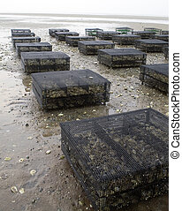 Oyster cages rest on an aqauculture flat on Cape Cod. -...