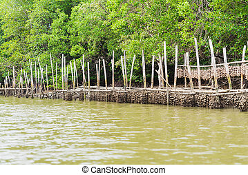 Oyster farm in mangrove forest area at Chanthaburi, Thailand. One of the best tourist attraction in Thailand.