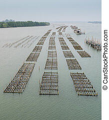 Oyster farm in Thailand