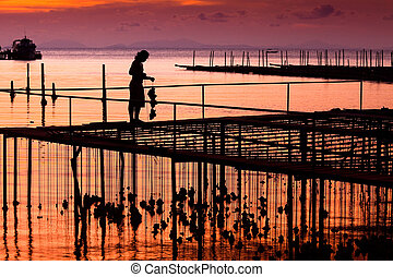 Oyster Farming, Pier of Cap-ferret in Thailand