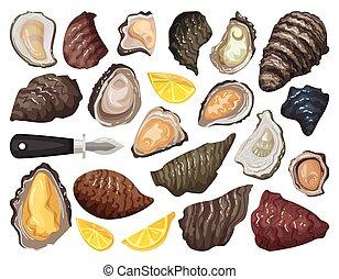 Oyster isolated cartoon set icon. Vector cartoon set icon shellfish food. Vector illustration oyster on white background.