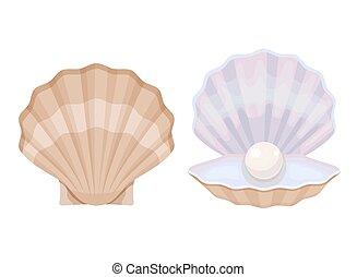 oyster., pearl., abierto, perla, blanco, cerrado, cáscara