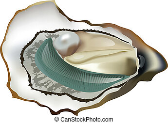 oyster, marennes, oleron