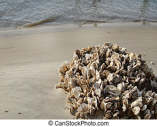 Oyster Shell Cluster On Beach