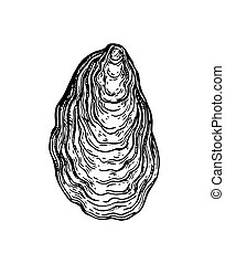 Oyster shell ink sketch. Isolated on white background. Hand...