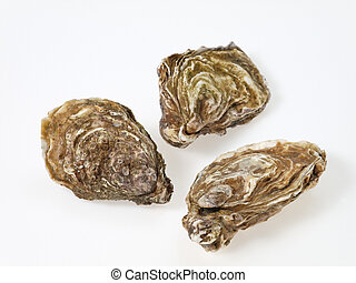 Oyster - three oysters