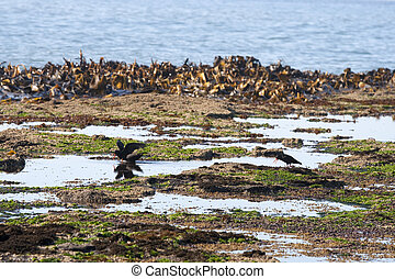 Oystercatchers on the beach