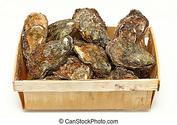 Oysters crate - Fresh rock oysters seafood clams in crate