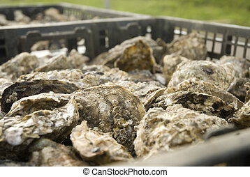 oysters in a container