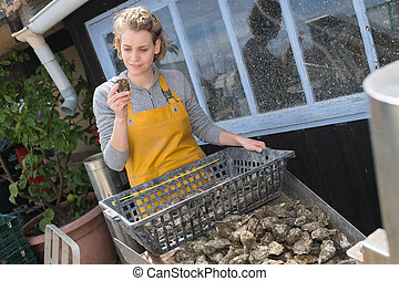 oysters in baskets in sea water pools