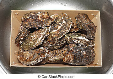 Oysters in Box
