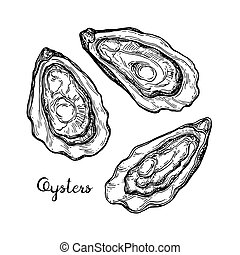 Oysters ink sketch. Isolated on white background. Hand drawn...