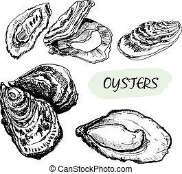 Oysters. Set of graphic hand drawn illustrations