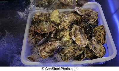 Oysters with crab in the aquarium. Oysters stored before...