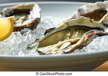 Oysters with lemon on plate