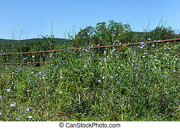 Ozark Roadside - Wildflowers bloom along the roadside in the...