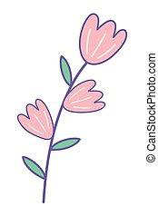 ozdoba, odizolowany, ilustracja, wektor, projektować, kwiaty