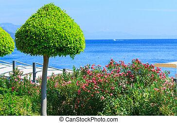 ozdobný, strom, dále, ta, moře, do, antalya